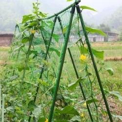 Укрытие и подвязка растений