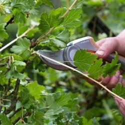Обработка кустарников, растений